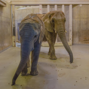 Elephant Flooring