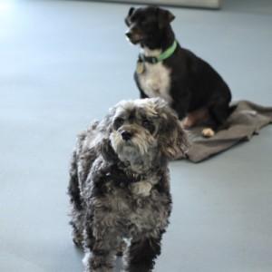 Kennel Animal Flooring